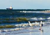 Kiel - Möwen am Strand - Laboe