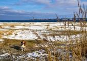 Kiel - Falckensteiner Strand winterlich mit Hund