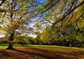 Herbst in der Forstbaumschule 4