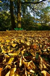 Herbst in der Forstbaumschule 2