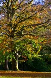 Herbst in der Forstbaumschule 6