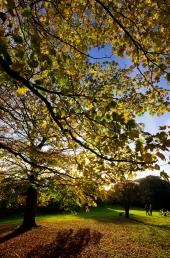 Herbst in der Forstbaumschule 1