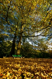 Herbst in der Forstbaumschule 7