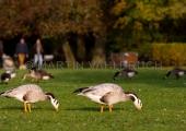 Herbst im Schrevenpark 3