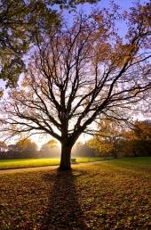Herbst in der Forstbaumschule 3