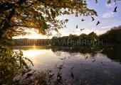 Herbst im Schrevenpark 7