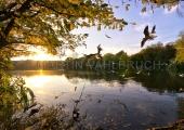 Herbst im Schrevenpark 8