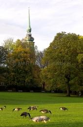Herbst im Schrevenpark 5