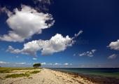 Die Bäume auf der Lotseninsel