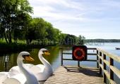 Usedom - Kölpinsee - Schwanenboote